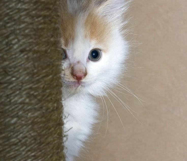 Картинки прикольных котят с надписью