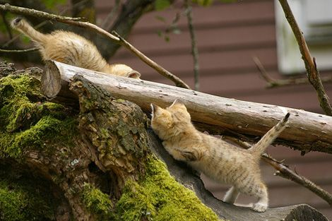 Sand Cat Kittens Debut at Sweden's Parken Zoo [cute warning!] | Catster