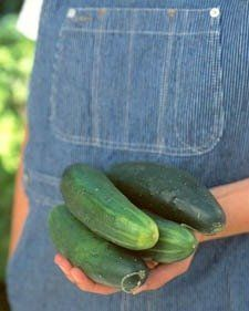 Cucumber Primer:  Kirby, Gherkin, English, and More...