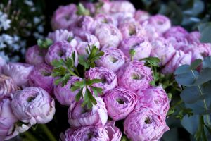 Peony Flower Meaning | Flower Meaning