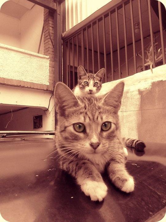 My cats <3: Cat
