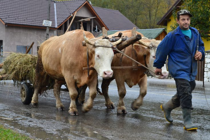 Maramures, Romania http://www.touringromania.com/regions/maramures.html