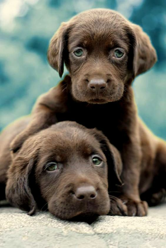 Best Sad Black Adorable Dog - 58acdb52a7172dcd71ce78b4d7b3b39b--kittens-and-puppies-cute-kittens  Gallery_711567  .jpg