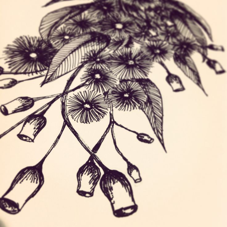 australiana drawings - Nicole Seabrook