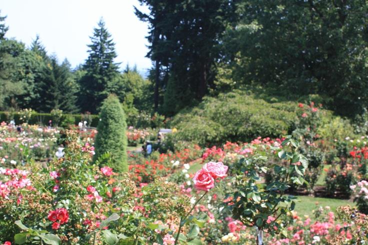 Portland, OR Rose Garden