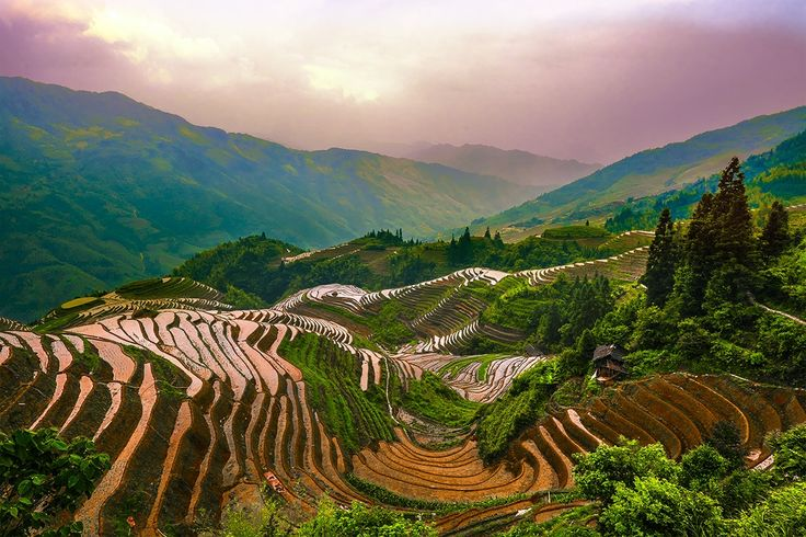 Фотография Dragon Spine Rice Terraces автор Edward Marcinek на 500px