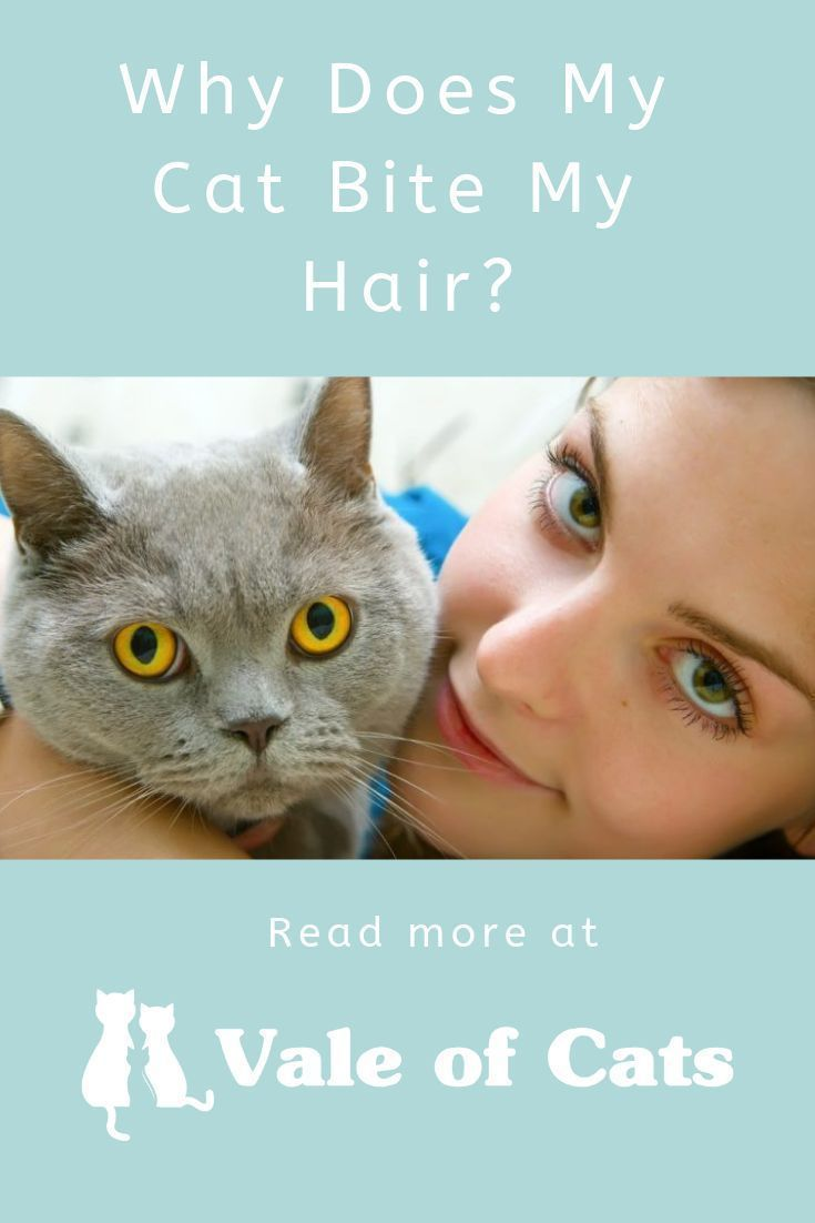 Why Does My Cat Bite My Hair Cat Biting Cats Cat Behavior