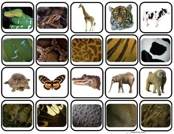 """Animal Body Coverings"" Match & Sort for Autism $3.00"