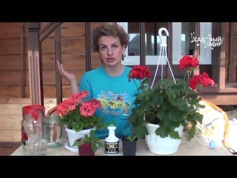 """Как вырастить лобелию ЧАСТЬ 1. Сайт """"Садовый мир"""" - YouTube"""