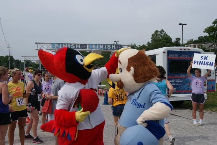 Fred Bird Rubbing Floyd's Head #cardinals #stl #stlouis #baseball #events #promotions #marketing #fun #mascot