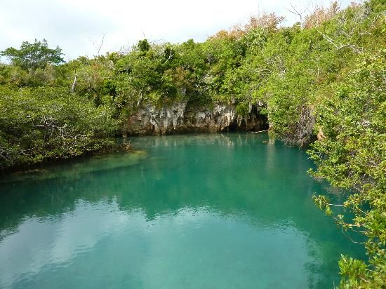 | the lagoon in Tom Moore's Jungle - Picture of Sandys Parish, Bermuda