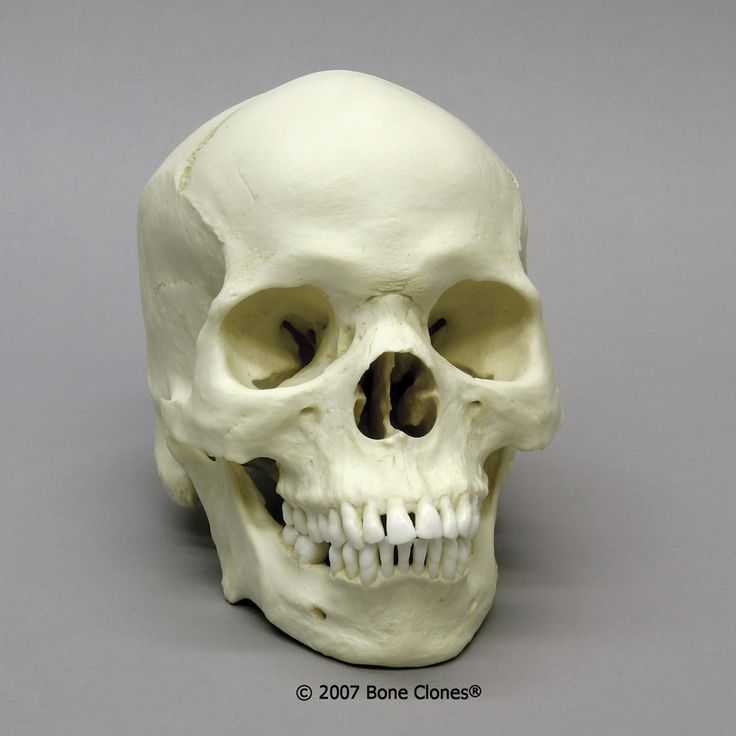 Not Skull structures different races have