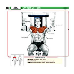 pec deck exercise machine butterfly press workout  gym