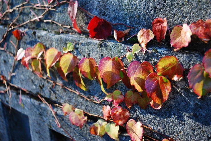 Autumn Line | by littlekiss☆
