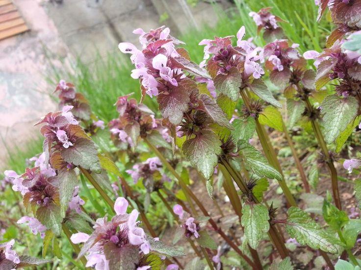 Doğadan renkli çiçekler #gümüşhane