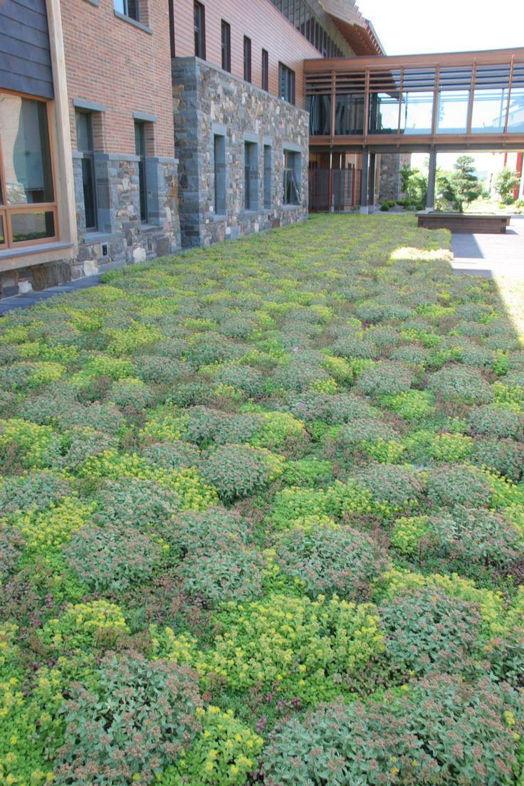 lawn alternatives minnesota gardener