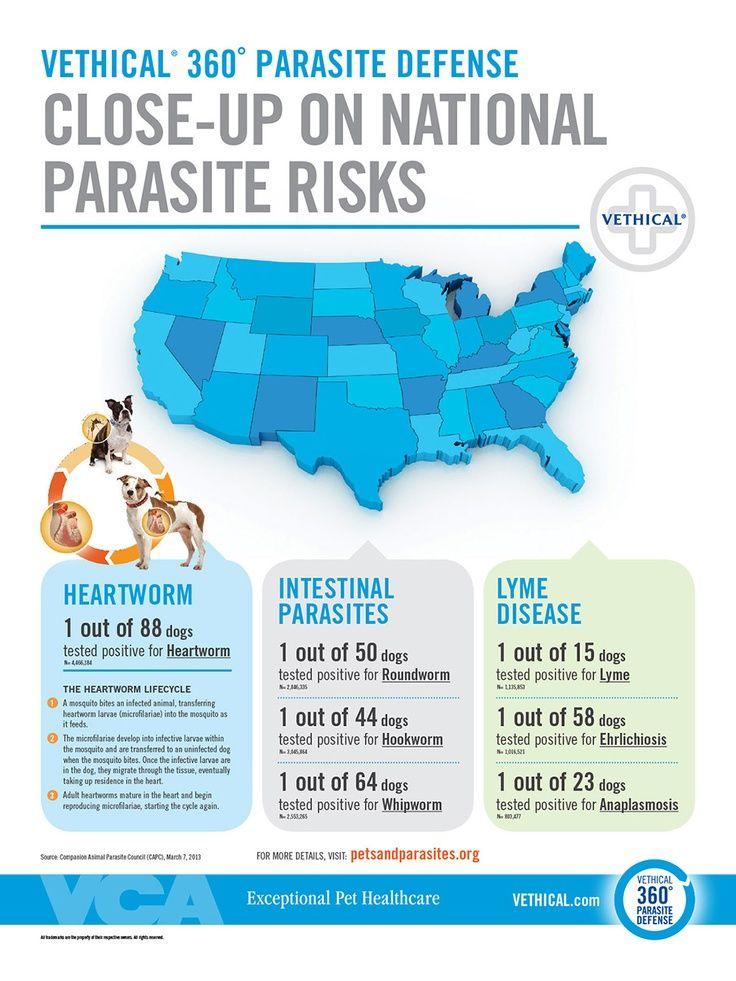 National parasite map animal hospital vet tech school
