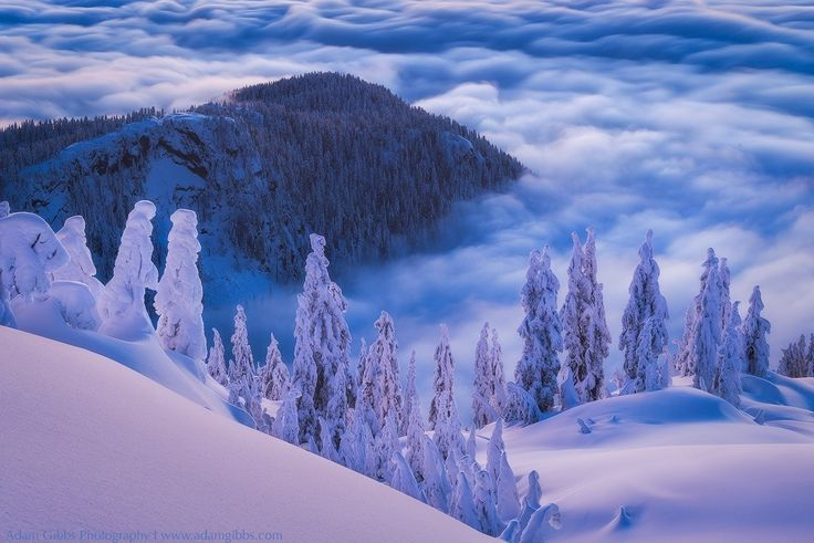 Above the Clouds - A particularly glorious evening near the summit of Mt. Seymour. One advantage to living in Vancouver is that we have quick access to the local mountains.   On this evening it was raining in the city so I was in no rush to hike on up. As I reached the half way point I could see that it was clear above. I put my ski poles and legs in to high gear and made it to the summit in record time long enough to take a few shots before the soft light was gone.  Thanks for looking