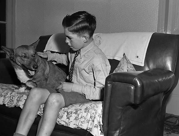 A young Corgi breeder, St Martin's. | Flickr - Photo Sharing! 1956