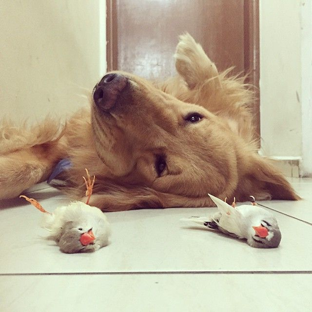 A dog, 8 birds and cute hamster best friends ever - Imgur