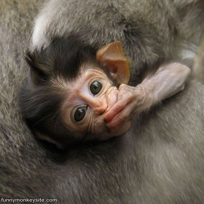 Baby Monkeys Are The Cutest Creatures (20 Photos)