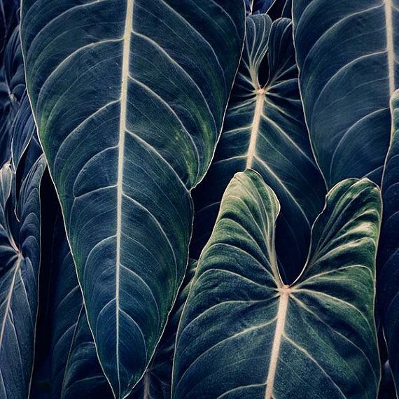 Something Blue  Botanical Print in Dark by EyePoetryPhotography, $32.00