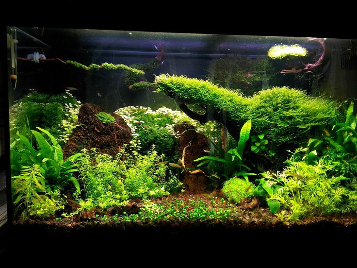 120 liter tank beautiful fish tanks and aquariums for Aquarium 120 litres