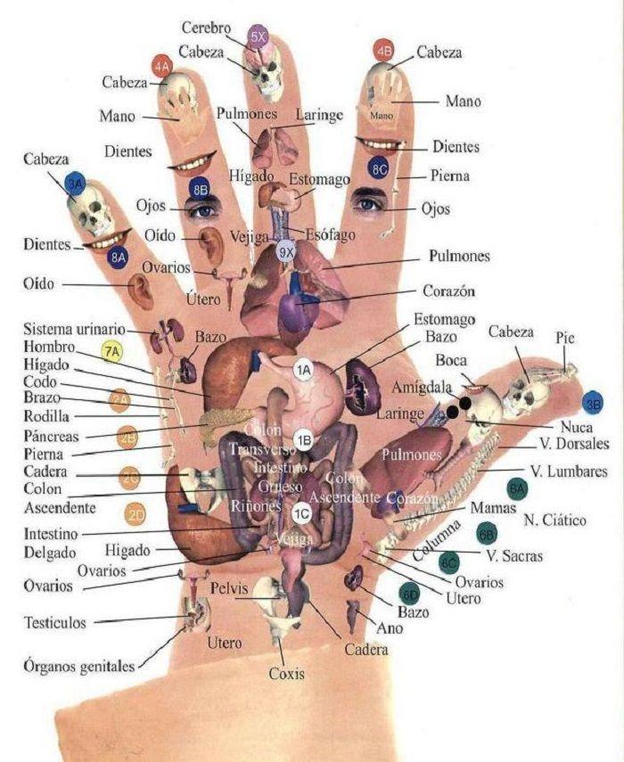 Tudo está na ponta dos seus dedos - pressione estes pontos para eliminar sua dor
