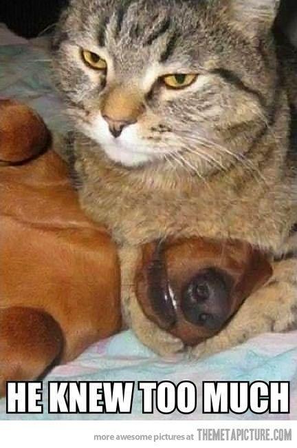 Best 10 Evil Cats Ideas On Pinterest Funny Kittens