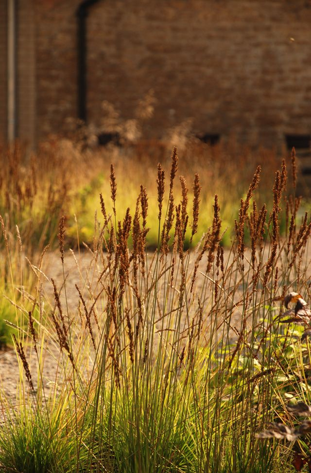1000 images about ornamental grass perennial meadows on for Ornamental grass edging