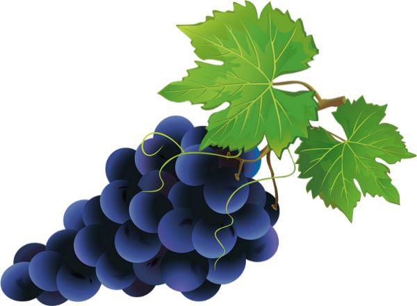 Czerwone winogrona: tube - Czarne winogrona png - Uva - Uvas png