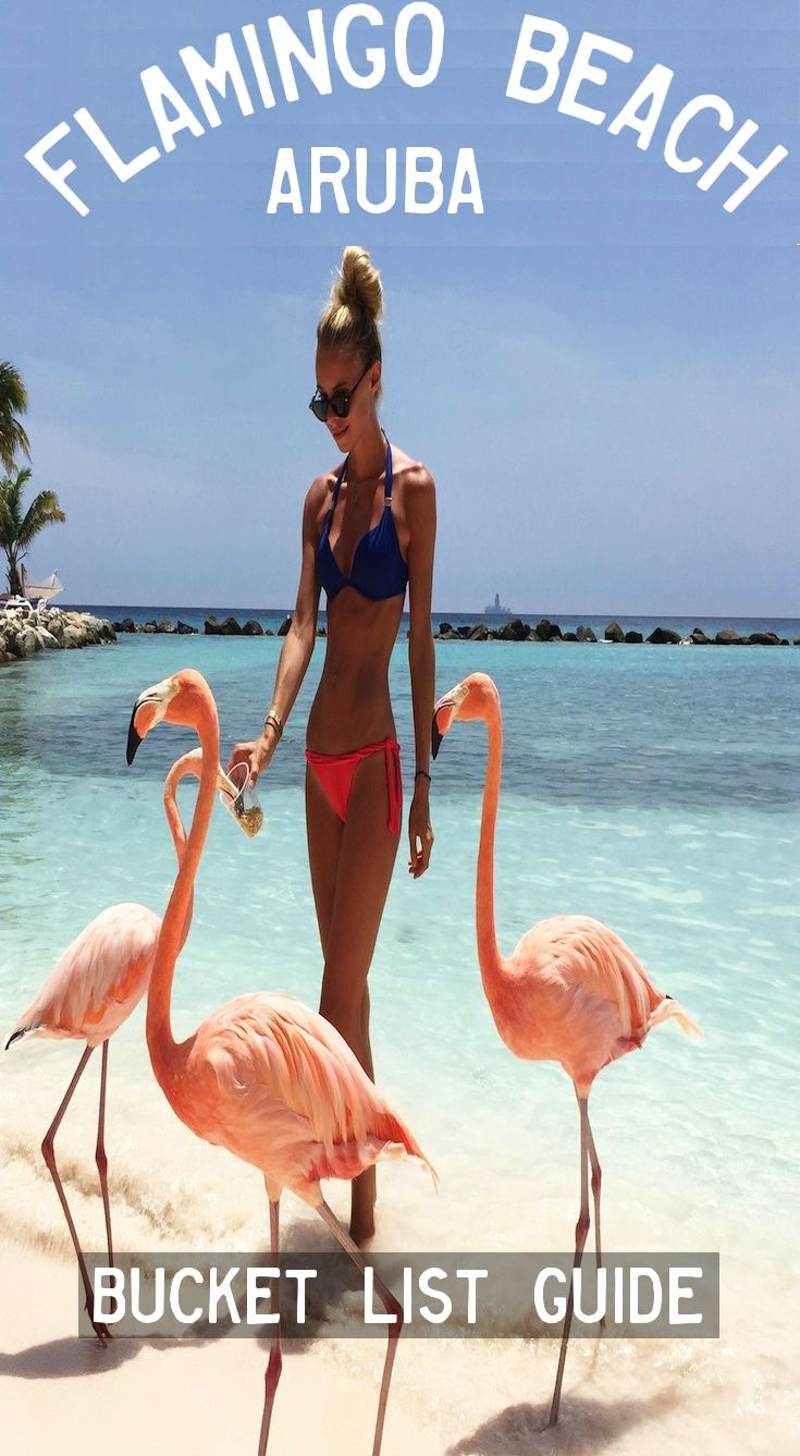 Flamingo Beach – Oranjestad, Aruba. FULL GUIDE