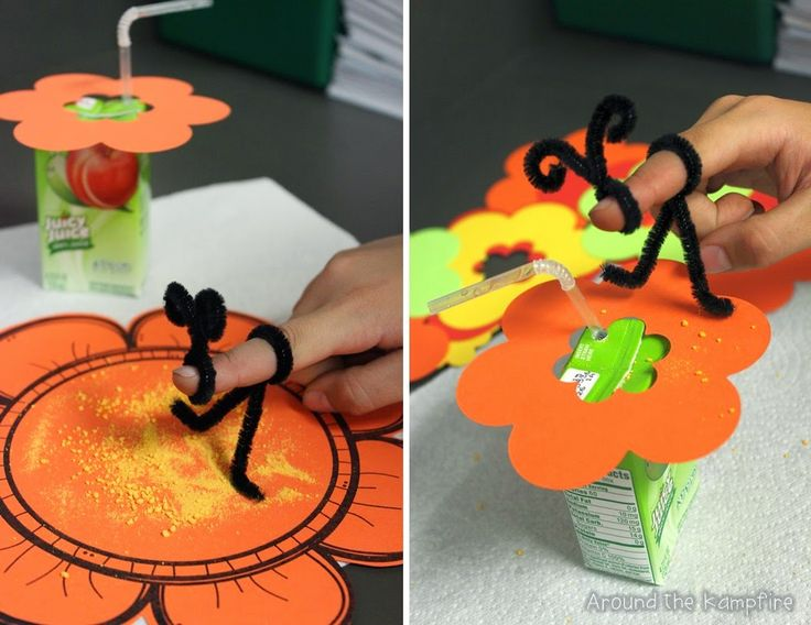 pollination projects for kids