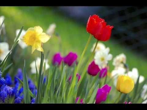 Peter de Koning - Het is altijd lente (in de ogen van de tandartsassistente) - YouTube