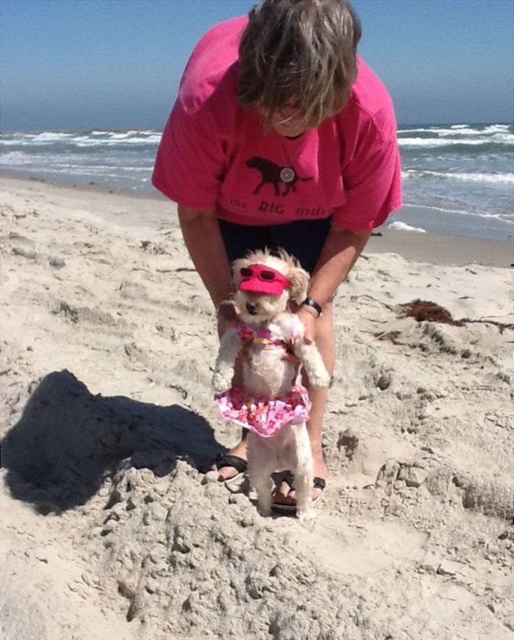 Mazie's Story -- Pets, Dogs, Cute