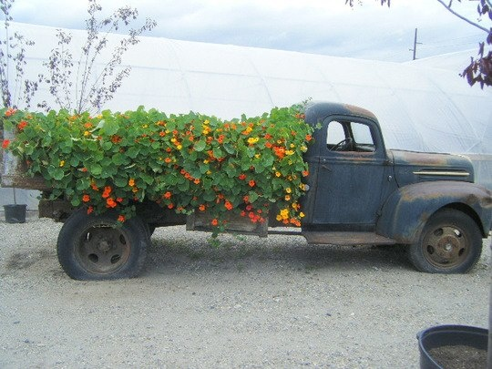 Marvelous Vintage Old Truck With Flowers