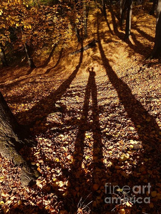My shadow in forest