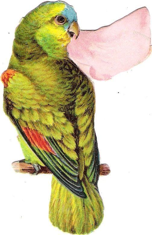 Oblaten Glanzbild scrap diecut chromo Papagei 10cm  parrot Kakadul bird oiseau: