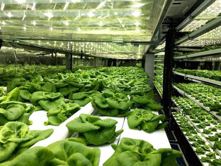 See inside this vertical farm where 65000 pounds of lettuce grow each year in shipping containers