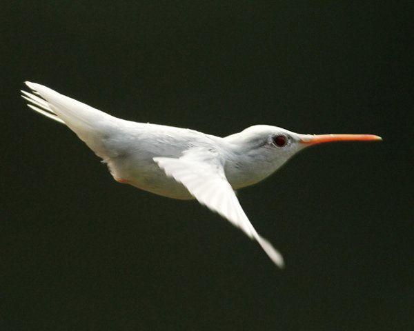 Best HUMMINGBIRDS Images On Pinterest Hummingbirds - Photographer captures amazing close up photos of hummingbirds iridescent feathers