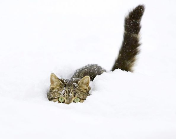 Cute Kittens And Puppies For Sale Cute Pictures Of Animals Cartoon By Cute Animals To Draw Kawaii That I Saw Many Adorable K Pets Cats Crazy Cats Snow Animals