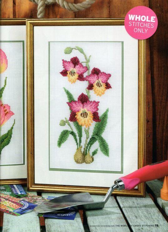 (9) Gallery.ru / Фото #2 - орхидеи - irislena