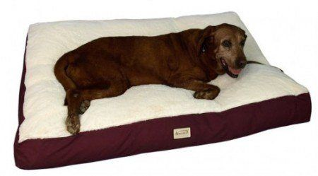 The Best Dog Beds For Labs And Large Dogs Reviewed