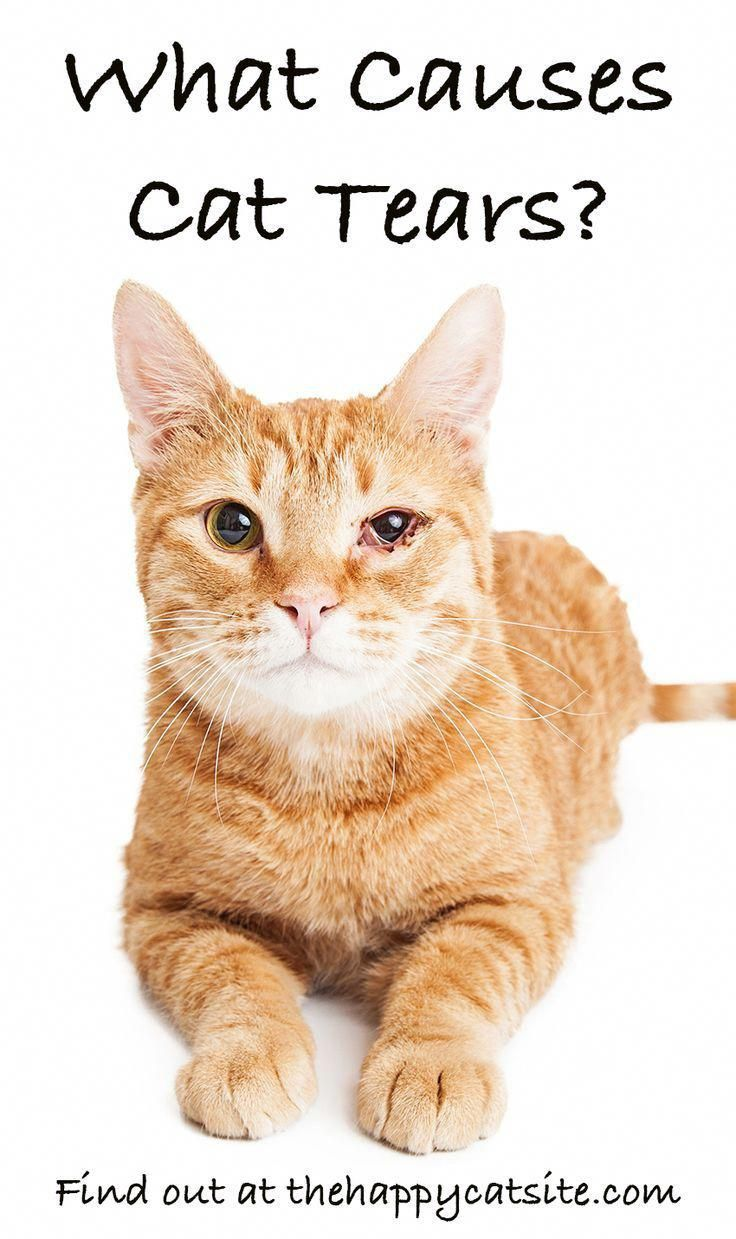 Why Do Cats Cry Tears Find Out At The Happy Cat Site Catsite Cat Crying Cats Cat Facts