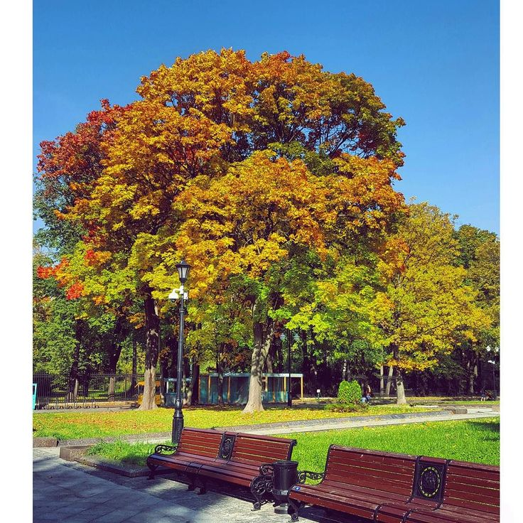 #осень #осень2015 #осеньосень #осеньвгороде #останкинскийпарк #останкино #краскиосени #красота #красиво #природа #moscowpark #moscow #autumn #autumncolors #autumnleaves