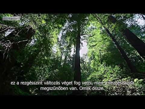 A rezgésszint változása - David Icke - YouTube