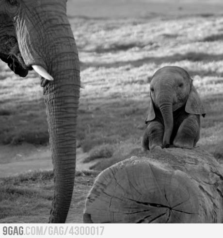 makes me clench my teeth.Animal Nature, Baby Elephants, Creatures, Cutie Elephant, Baby Animal, Animals Nature, Elephant Baby, Mom, Adorable Animal