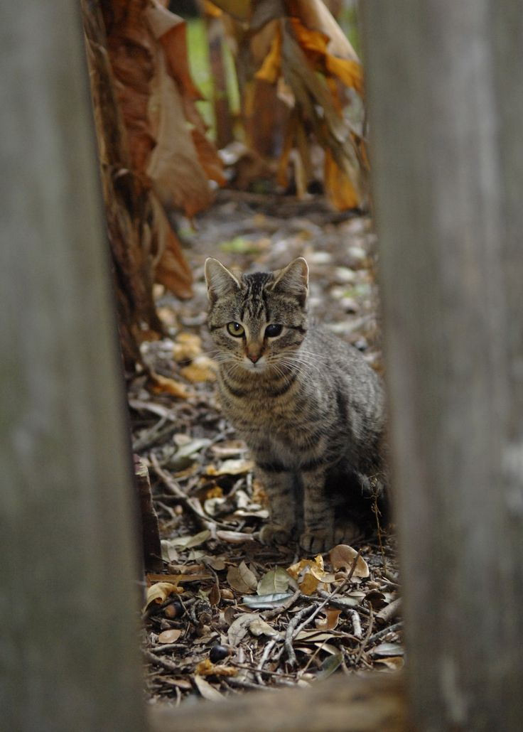 how to catch feral cats and kittens