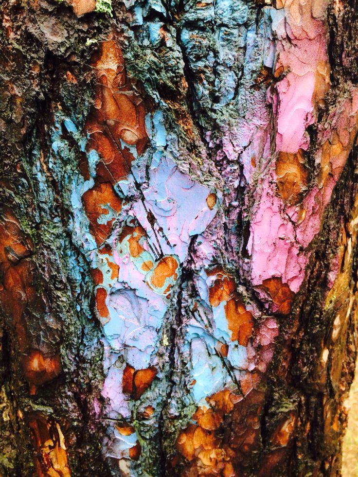 Кора дерева выступила в роли палитры для стрит-артиста... Или просто местной шпаны с балончиками.