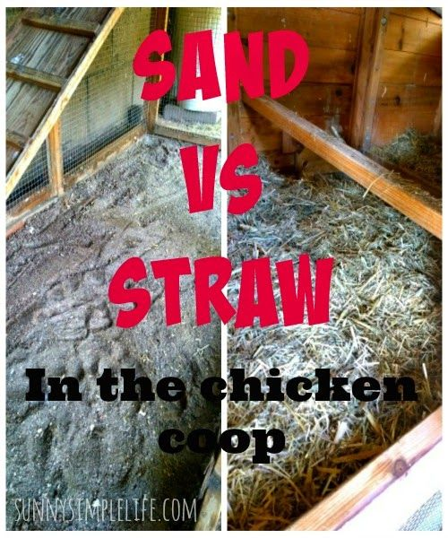 sand vs. straw or shavings in the chicken coop: I asked my grandma which they used in their coops growing up and she said dirt. Yes, the dirt on the ground, no built floor, just on top of the dirt, because dirt has natural sanitizing properties and so they had to whitewash the coop, but didn't have to really ever clean it.